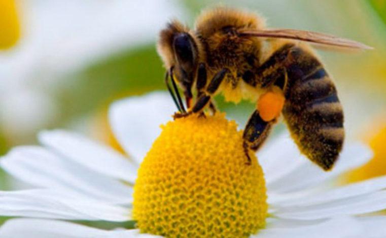 """""""No api no party"""", il terribile destino dell'essere umano se le api si avviassero all'estinzione"""