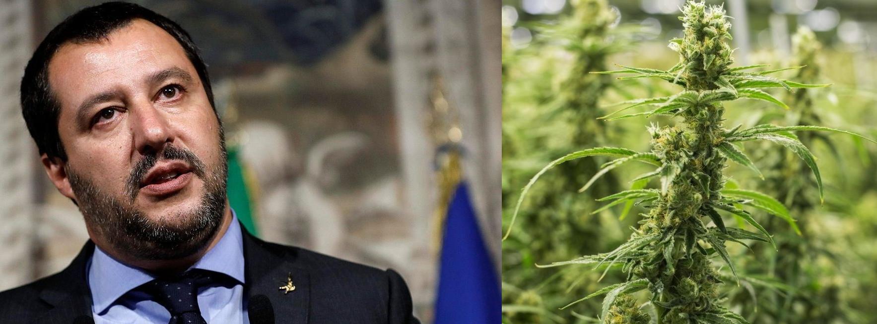 Matteo Salvini e la campagna di lotta alla cannabis light: che succede?