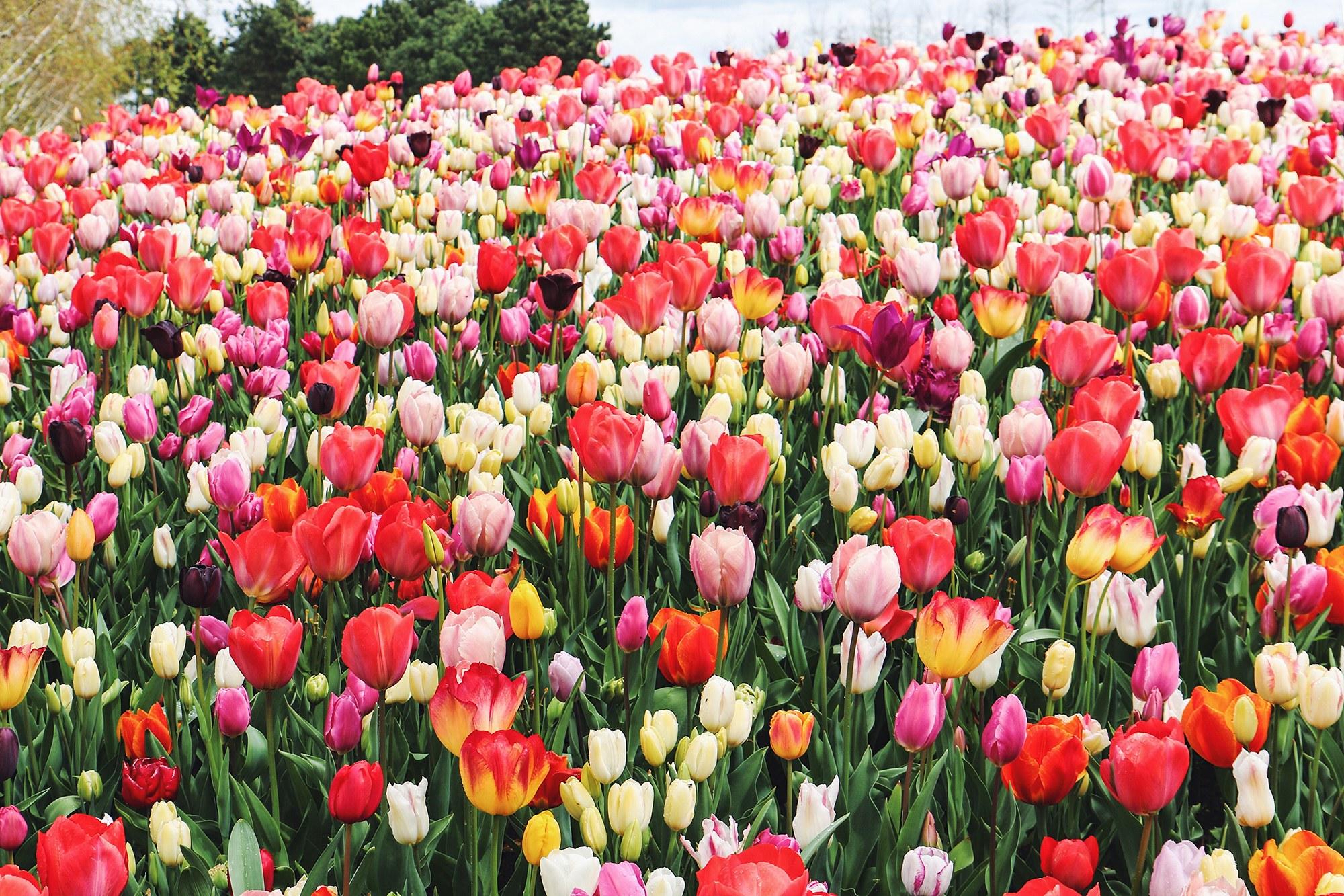 Buona Primavera! Da Pamela Prati e Mark Caltagirone alla poesia di Orazio