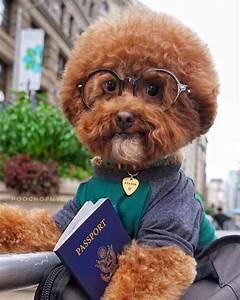 """""""I cani vestono Prada"""": l'eclissi dello stato di natura di Rousseau e l'umano in """"Lilli e il vagabondo"""""""