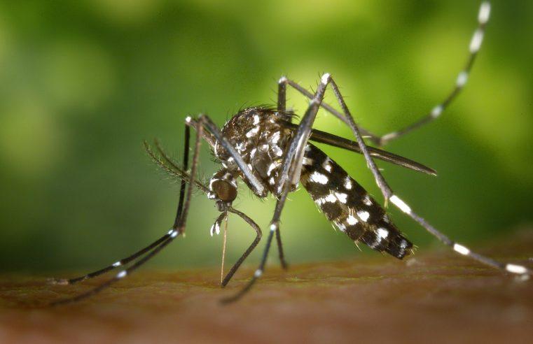 Ebbene sì, a quanto pare anche le zanzare rivestono un ruolo importante per l'ecosistema