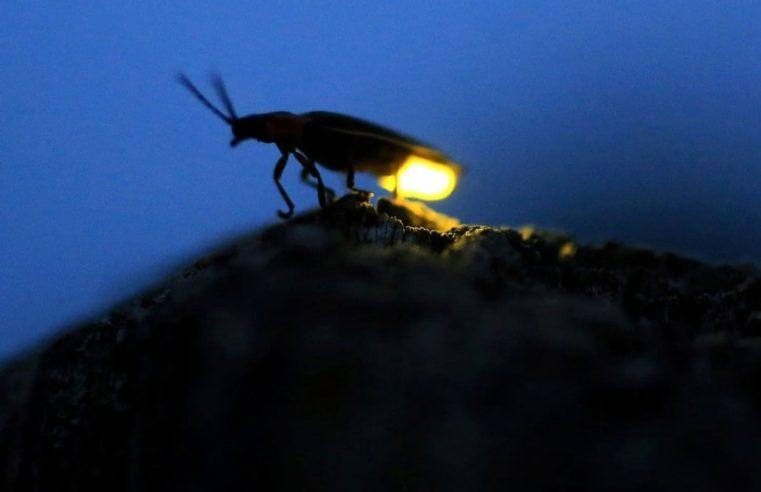 Da Pandora alla Terra, una luce nell'evoluzione: la Bioluminescenza