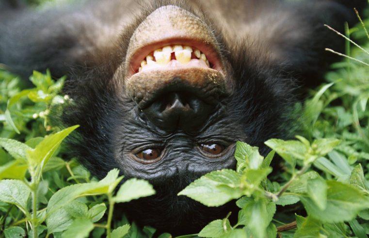 Vivere come i bonobo: Caparezza e McCandless contestano le teorie di Freud?