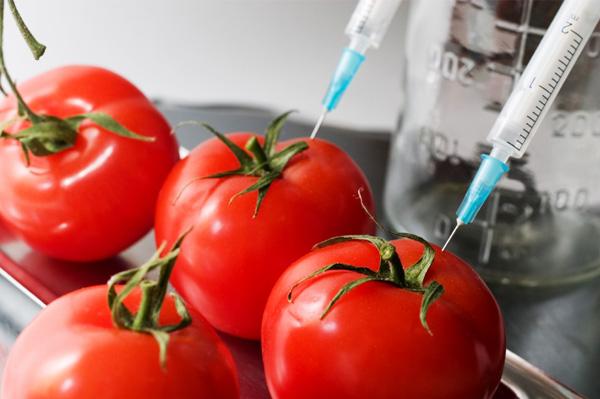 Nuova specie di pomodori resistenti alla siccità: la ricerca britannica sui retrotrasposoni Rider