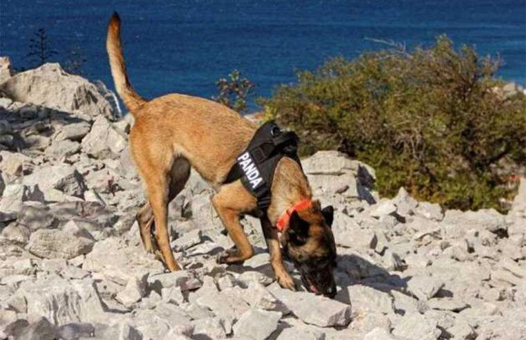 Croazia: dei cani aiutano a trovare tombe antichissime. Cosa cercano di preciso?