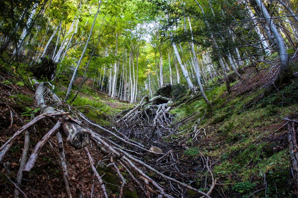 Per scaldarci senza scaldare il pianeta basterebbe sostituire i combustibili fossili con il legno
