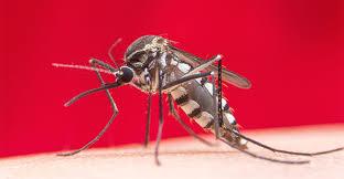 Ma potevamo annientarle? Uno studio (purtroppo) propone un farmaco antimalarico per le zanzare.