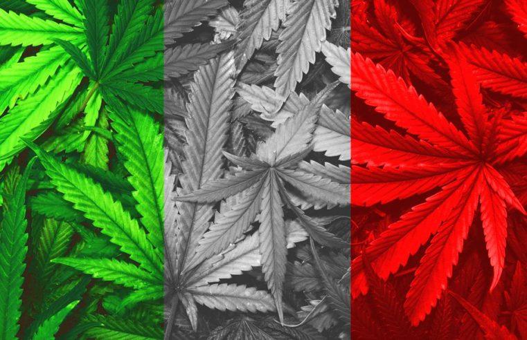 """Mario Catania supporta la canapa attraverso il suo libro: """"Cannabis. Il futuro è verde canapa"""""""
