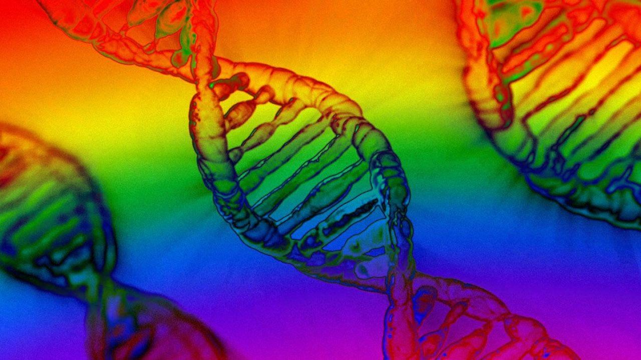 La bellezza e l'orientamento sessuale, le peggiori bufale sui test genetici