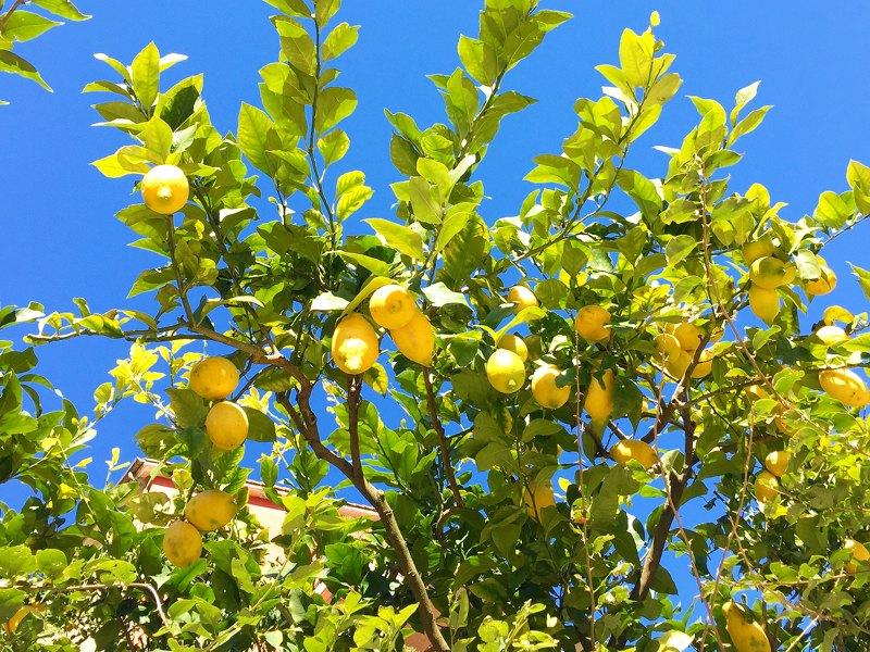 """""""I Limoni"""": la poetica di Montale alla costante ricerca di Simboli e Scorci"""