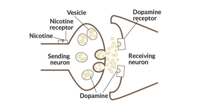 dopamina nicotina
