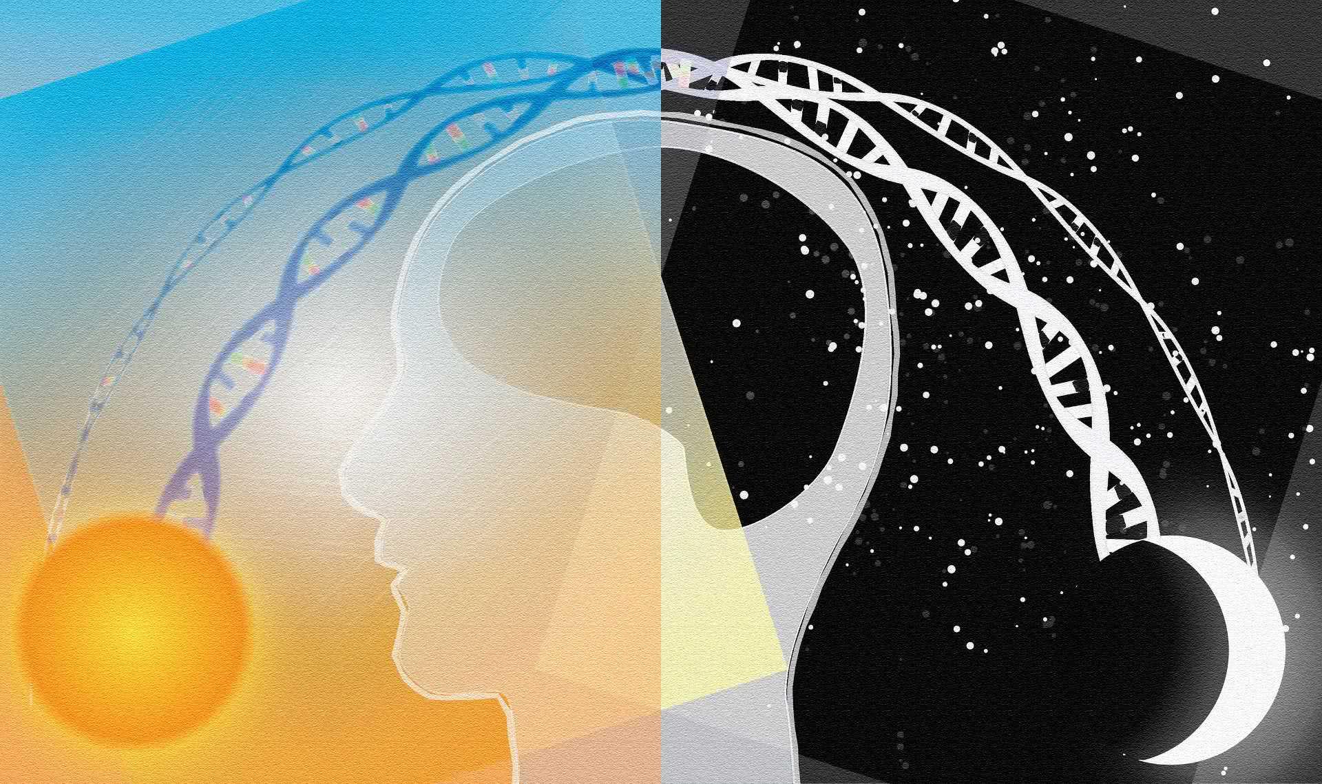 Quali sono le basi biologiche ed anatomiche del ritmo circadiano umano?