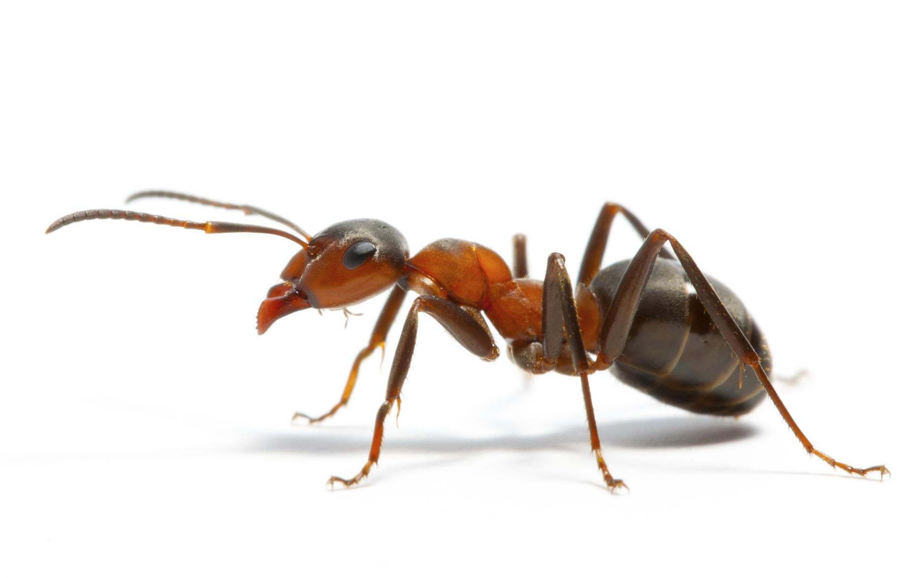 Come fascino e crudeltà si incontrano nel regno Animalia: viaggio nel mondo delle formiche